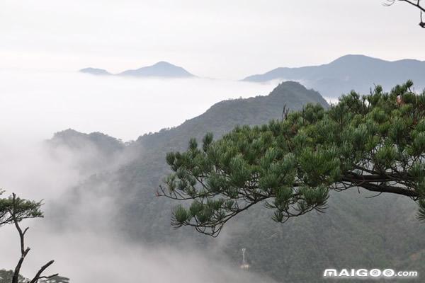 5.南岭国家森林公园工厂无限攻略图片